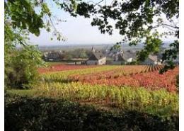 Puligny Montrachet La Garenne 1er Cru 2010