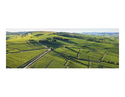 Bourgogne Pinot Noir 2004